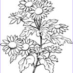 Coloring Sheets For Adults Flowers Unique Collection Flower Coloring Pages For Adults Best Coloring Pages For