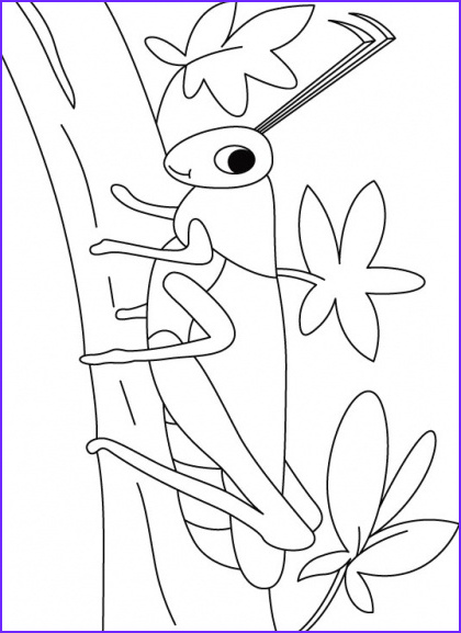 Coloring Sheets for Kids Com Awesome Photos Grasshopper On A Walk Coloring Pages