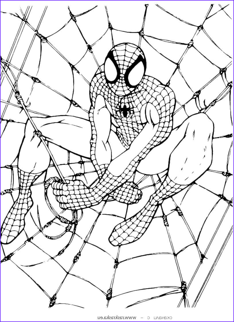 Coloring Spiderman Inspirational Stock Free Printable Spiderman Coloring Pages for Kids