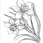 Coloring Steets Beautiful Photography Narcissus Coloring Pages To And Print For Free