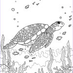 Coloring Supplies For Adults Awesome Images Turtle Adult Colouring Page Colouring In Sheets Art