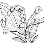 Coloring Unique Collection Lily Of The Valley Coloring Pages To And Print