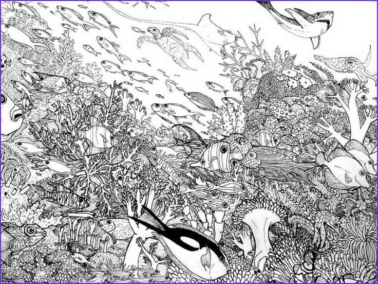 Coral Reef Coloring Page New Photos Coral Reef Creative Coloring Page Google Search