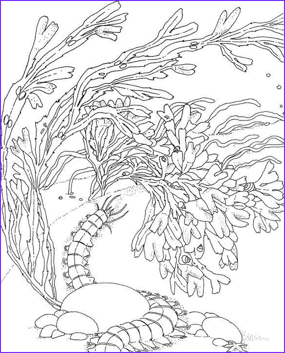 Coral Reef Coloring Pages Best Of Gallery Coral Reef Coloring Pinterest