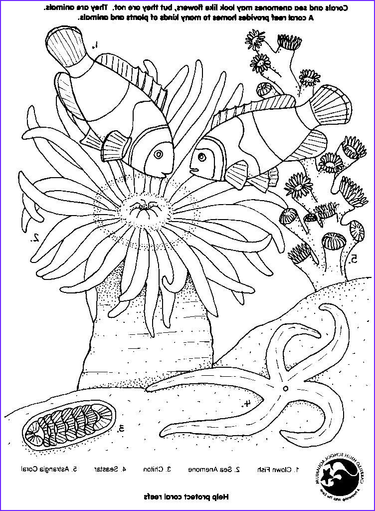 Coral Reef Coloring Pages Best Of Image Simple Coral Reef Coloring Pages Google Search