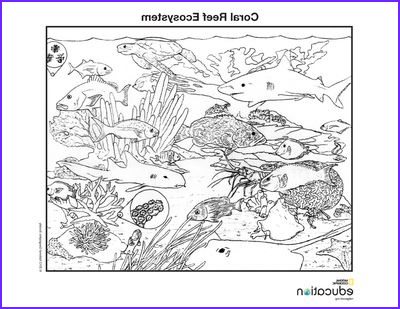 Coral Reef Coloring Pages Best Of Photography Coloring Pages