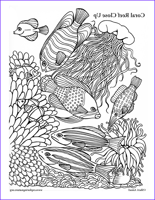 Coral Reef Coloring Pages Inspirational Image Coral Reef Close Up Coloring Page