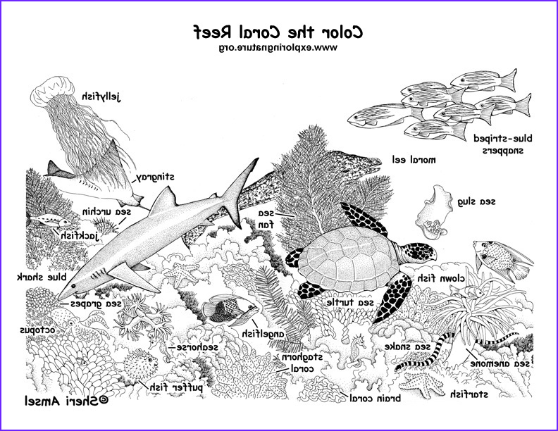 Coral Reef Coloring Pages Inspirational Photos Coral Reef Labeled Coloring Page