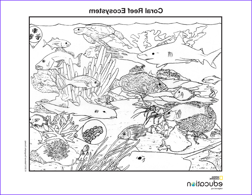 Coral Reef Coloring Pages Luxury Collection Sci B15 Ecosystem Biome Habitat – Hawkins Market