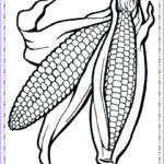 Corn Stalk Coloring Page Awesome Image Corn Stalk Drawing At Getdrawings