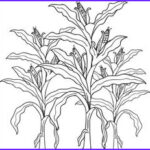 Corn Stalk Coloring Page Awesome Images Pumpkins And Corn Stalks Coloring Page