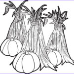 Corn Stalk Coloring Page Beautiful Photos Free Printable Pumpkins And Corn Stalks Coloring Page For