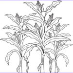 Corn Stalk Coloring Page Best Of Gallery Free Printable Corn Stalks Fall Coloring Page For Kids
