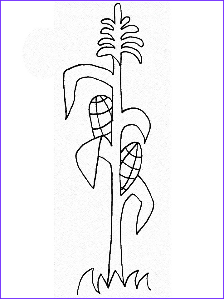Corn Stalk Coloring Page Best Of Image Corn Stalk Drawing at Getdrawings