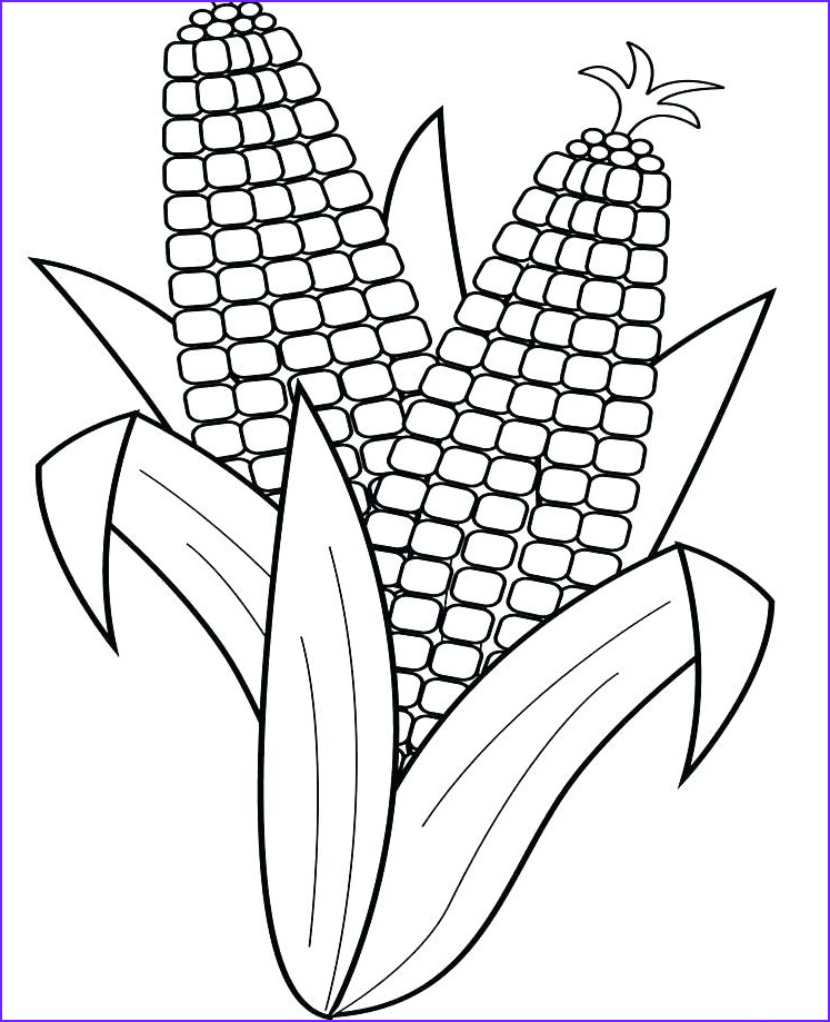 Corn Stalk Coloring Page Best Of Stock Corn Stalk Coloring Page at Getcolorings