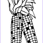 Corn Stalk Coloring Page Cool Gallery Corn Drawing Image At Getdrawings