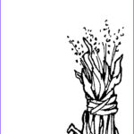 Corn Stalk Coloring Page Cool Gallery Corn Stalk Coloring Page Cliparts