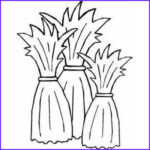 Corn Stalk Coloring Page Cool Stock Corn Stalk Silhouette At Getdrawings