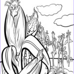 Corn Stalk Coloring Page Luxury Images Corn Stalks Drawing At Getdrawings