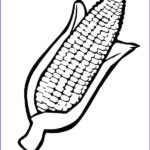 Corn Stalk Coloring Page New Photography Ear Corn Drawing At Getdrawings