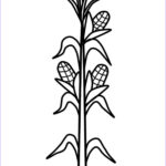 Corn Stalk Coloring Page Unique Photography Corn Stalk Drawing At Getdrawings