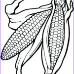 Corn Stalk Coloring Page Unique Stock Corn Drawing At Getdrawings