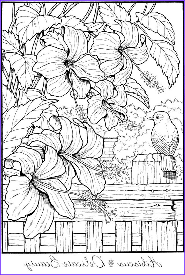 Creative Haven Coloring Pages Beautiful Photos 1391 Best Creative Haven Coloring Pages by Dover Images by