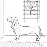 Dachshund Coloring Book Awesome Photography 1000 Images About Dachshund Coloring Pages On Pinterest