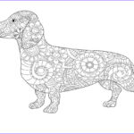 Dachshund Coloring Book Awesome Photos Dachshund Coloring Pages Astonishing Book Line Drawing