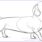 Dachshund Coloring Book Best Of Collection How To Draw A Dachshund