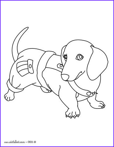 Dachshund Coloring Book Luxury Stock Pin by 21st Essential Pet On Kids and Pets Coloring Pages