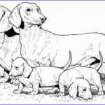 Dachshund Coloring Book New Collection Dachshund Teenagers Coloring Pages