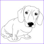 Dachshund Coloring Book New Gallery 16 Best Dachshund Coloring Pages Images On Pinterest