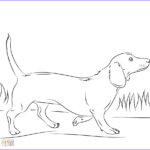Dachshund Coloring Book New Image Dachshund Dog Coloring Page