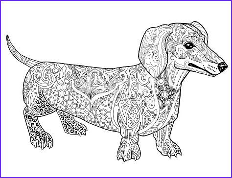 abstract dachshund doodle coloring book page for adult gm