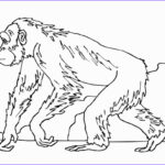 Daniel And The Lions Den Coloring Pages Beautiful Photos Letter S Coloring Pages Coloring Pages