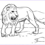 Daniel And The Lions Den Coloring Pages Cool Photos 764 Tigry I Lvy