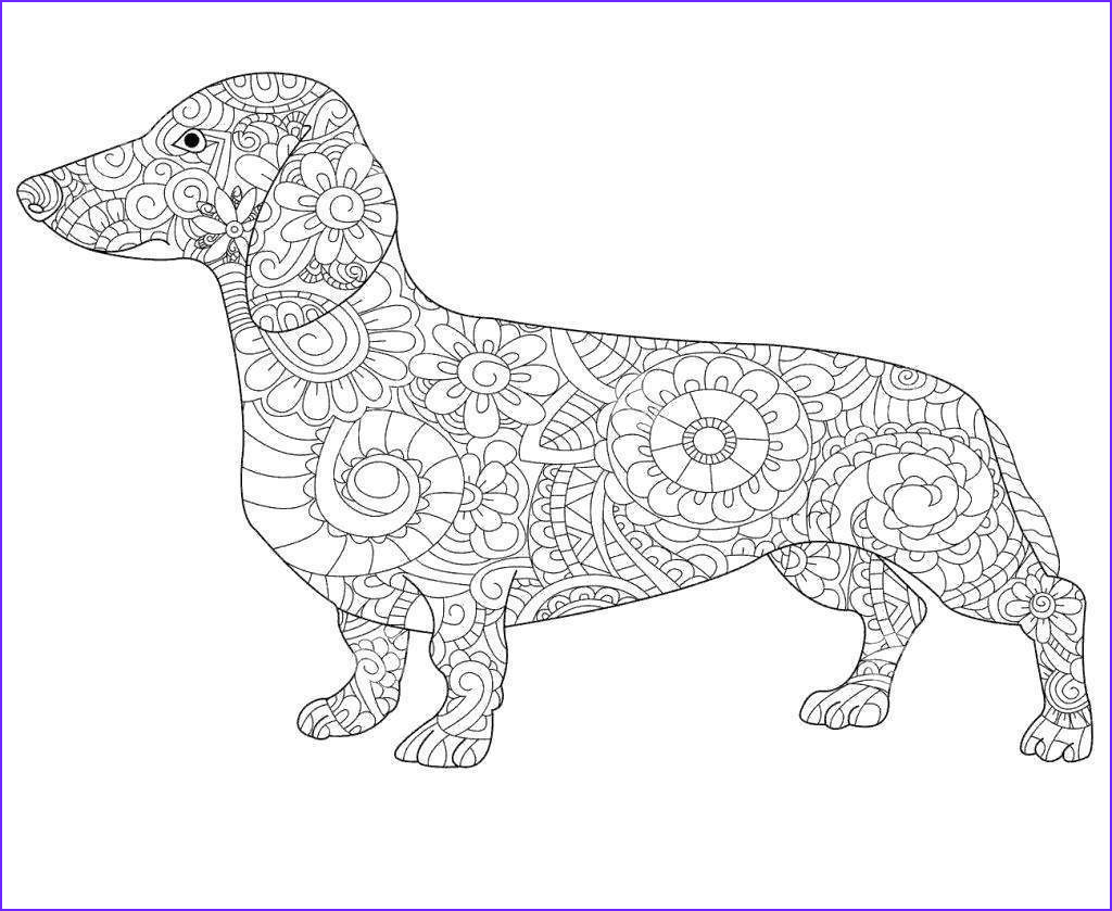 dachshund coloring pages astonishing book line drawing