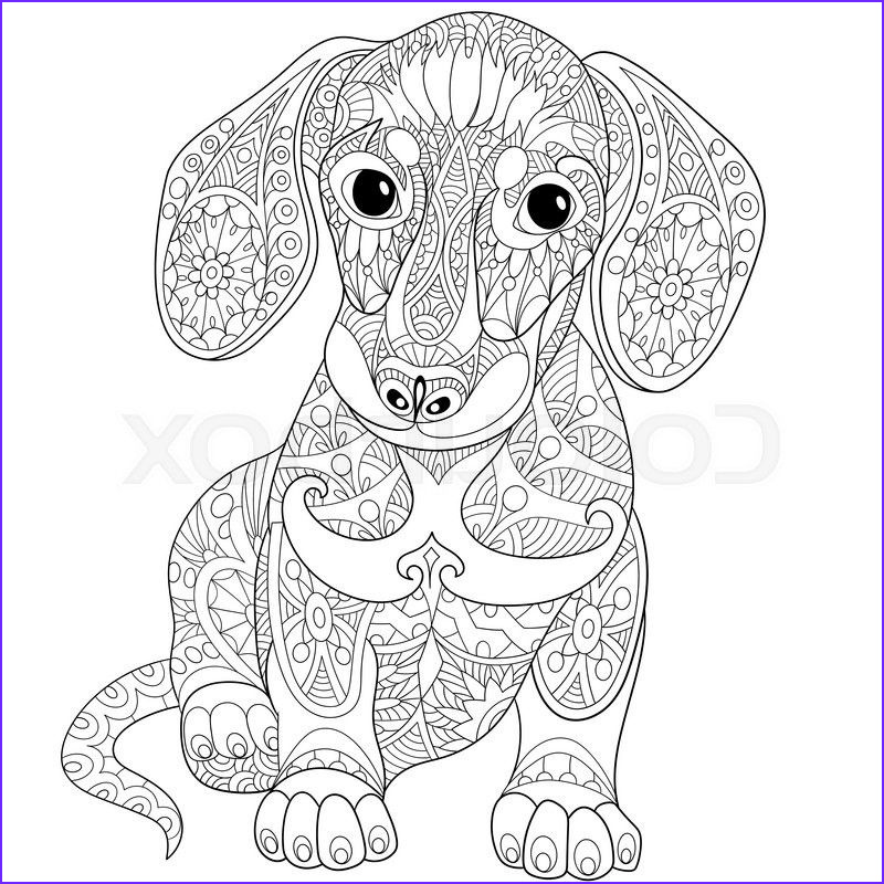 Daschund Coloring Book Best Of Photography Dachshund Coloring Pages Adult Funny