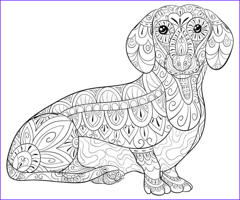 cute little dachshund coloring relaxing zen art style illustration poster wallpaper adult coloring page cute dachshund image