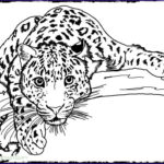 Detailed Coloring Pages For Adults Awesome Photos Free Printable Coloring Book Pages Best Adult Coloring
