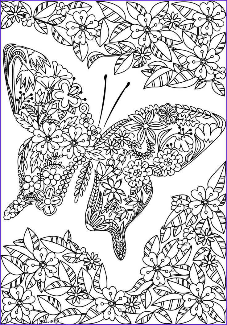 Detailed Coloring Pages for Adults Beautiful Collection Detailed butterfly Coloring Pages for Adults
