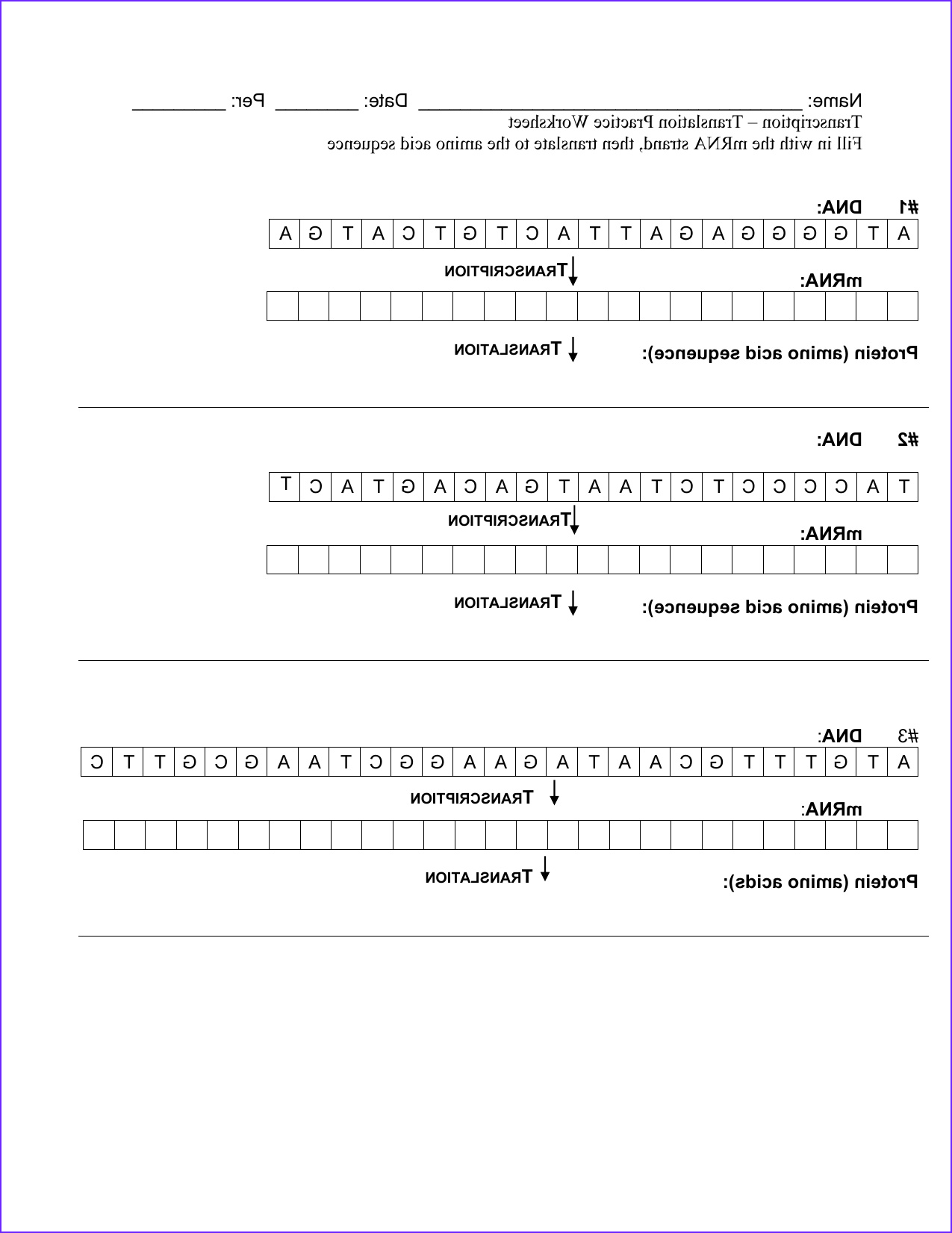 transcription and translation practice worksheet answers