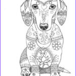 Dog Adult Coloring Book Unique Photos Coloring Page Bob Dachshund Love