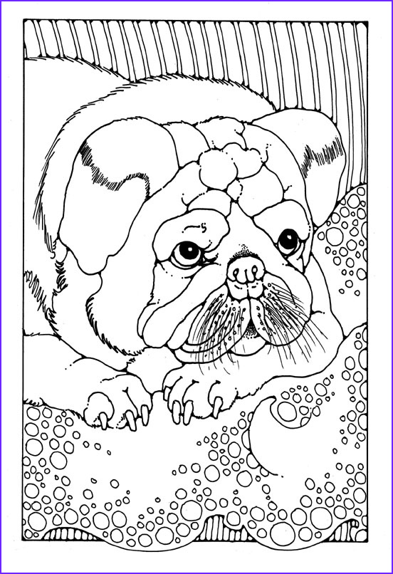 Dog Coloring Book for Adults Awesome Photos Dogs to Colour In