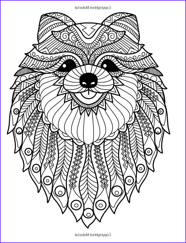 Dog Coloring Book for Adults Elegant Image Doodle Dogs Coloring Books for Grownups Featuring Over 30