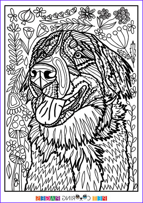 Dog Coloring Book for Adults Elegant Photography 494 Best Cats Dogs Coloring Pages for Adults Images On