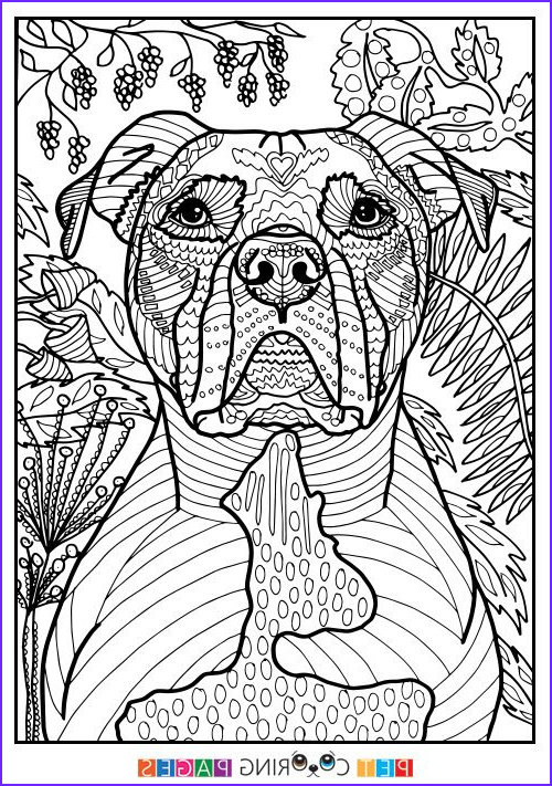 Dog Coloring Book for Adults Elegant Photos Free Printable American Pit Bull Terrier Coloring Page