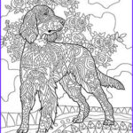 Dog Coloring Book For Adults New Stock 629 Best Images About Adult Colouring Cats Dogs