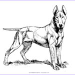 Doggie Coloring Pages Beautiful Photos Dog My Coloring Land